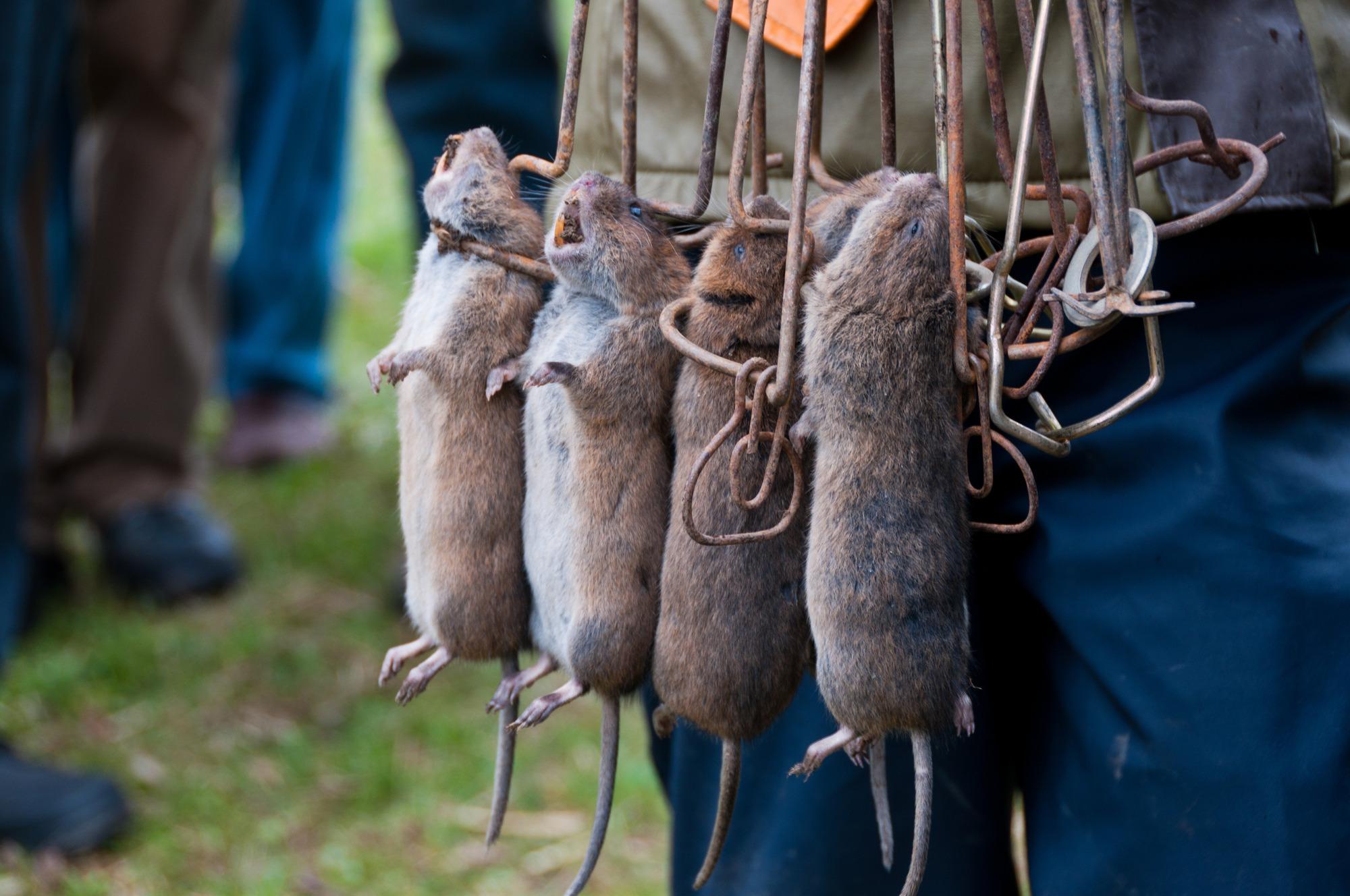Außergewöhnlich Mäusen geht's an den Kragen - Datenschutz - Teckbote @TP_23