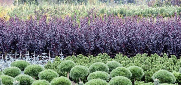pflanzen haben s gut ruhe ist angesagt themenwelten teckbote. Black Bedroom Furniture Sets. Home Design Ideas